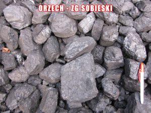 Orzech - ZG Sobieski